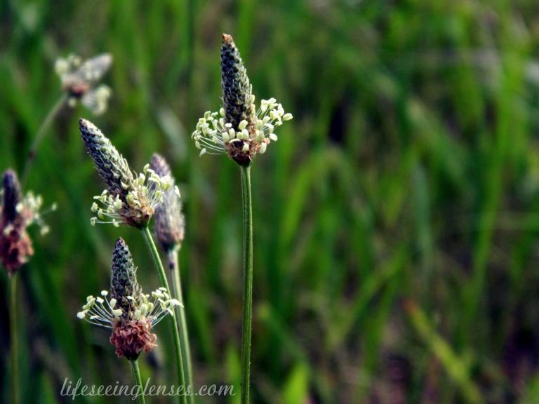 weeds1amarked