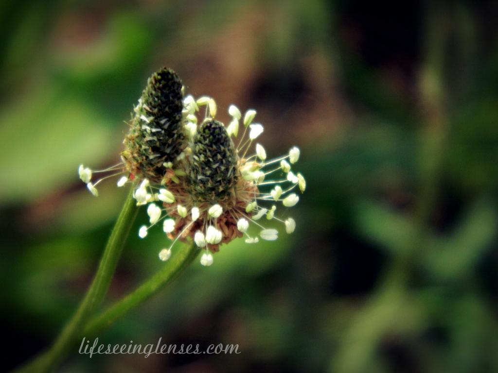 weeds2bmarked