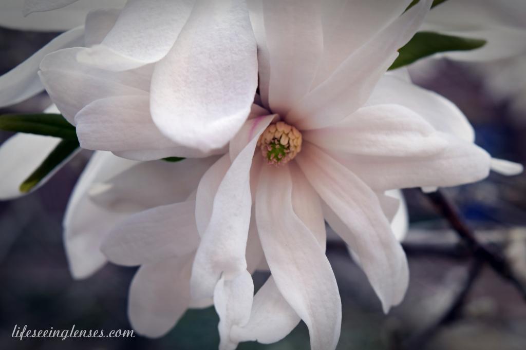 blooms10Amarked.JPG