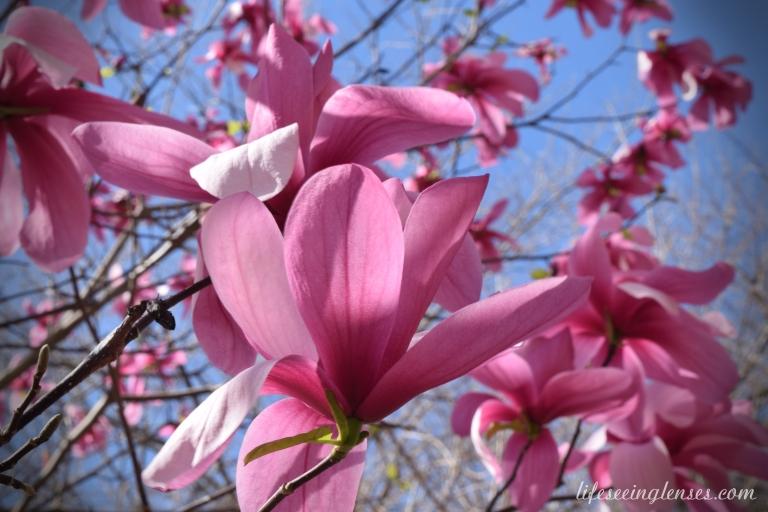 blooms12Amarked.JPG