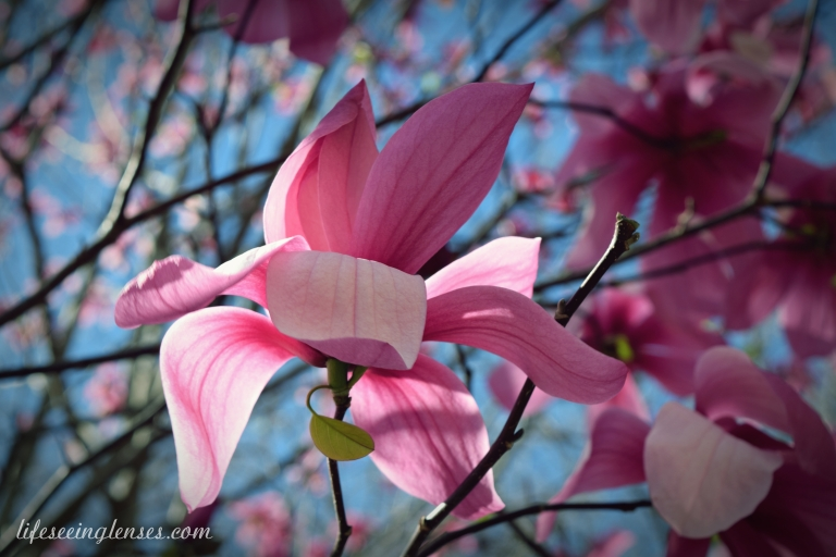 blooms1amarked