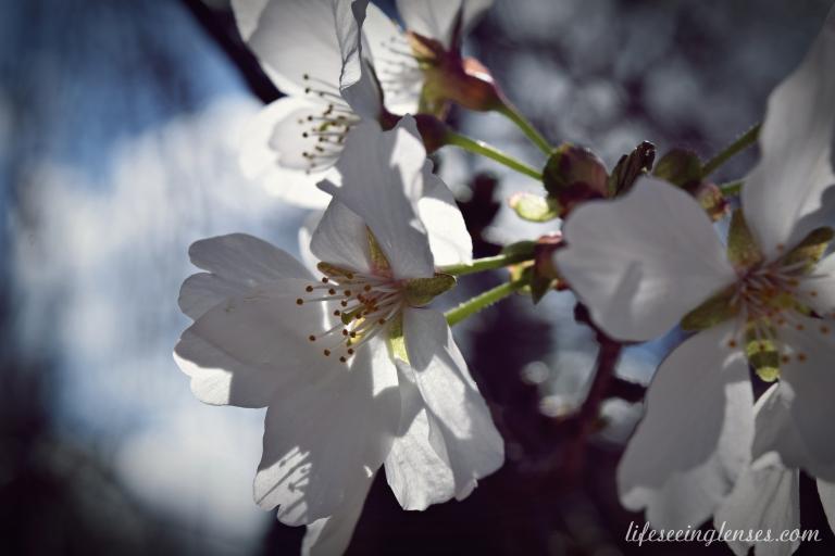 blooms6Bmarked.JPG