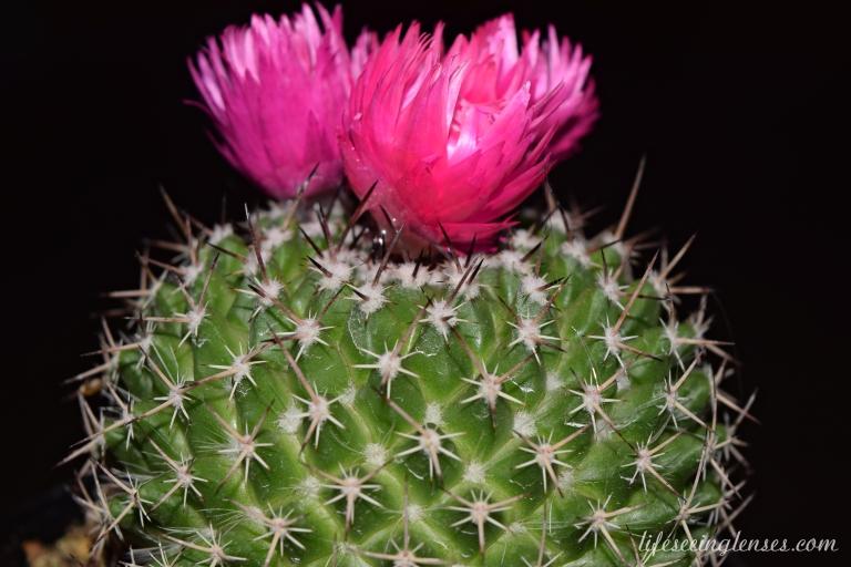 cacti1marked