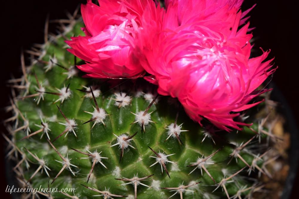 cacti2marked.JPG