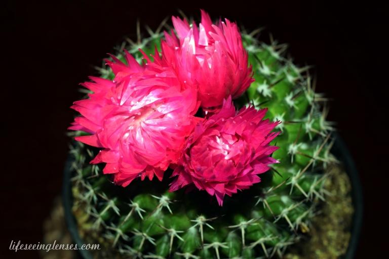 cacti5marked