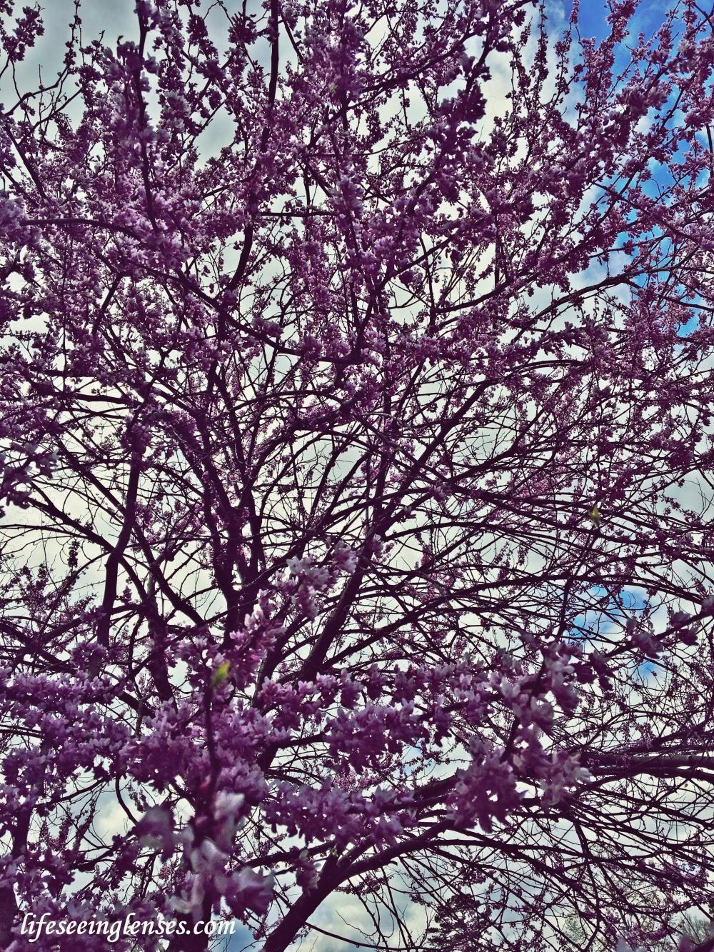 flowers1amarked.JPG