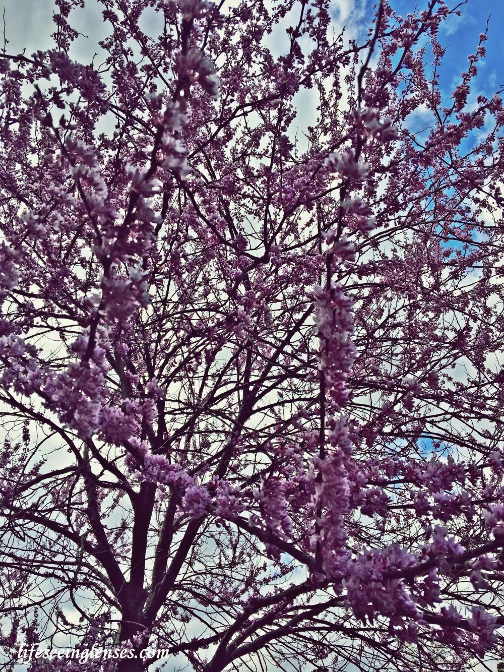 flowers2amarked.JPG