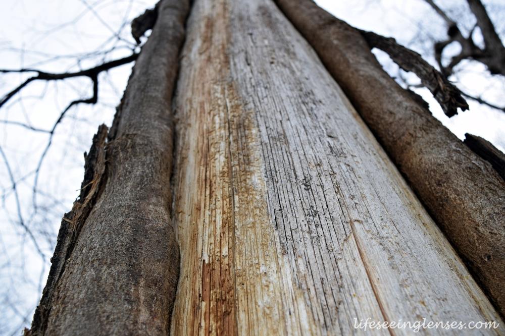 tree1marked.JPG