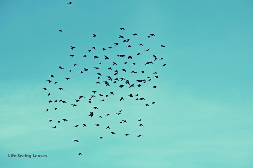 birds1Bmarked
