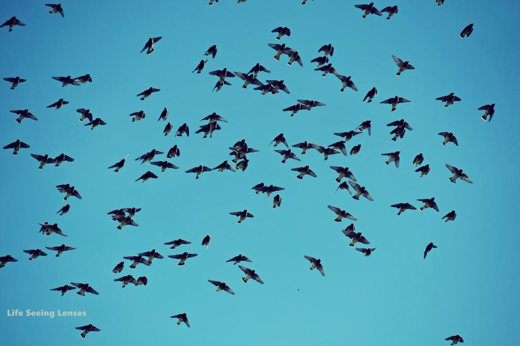 birds3Amarked