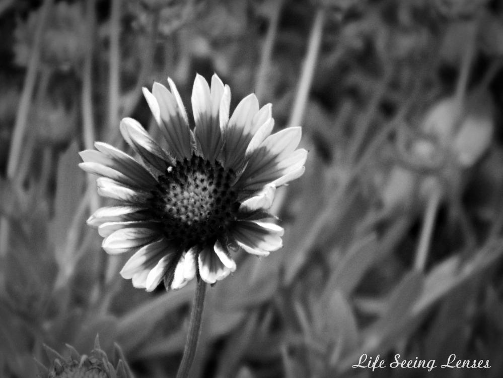 flower4BWmarked.JPG