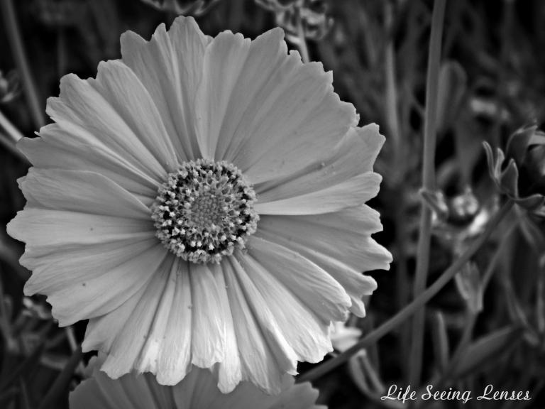 flower7BWmarked.JPG